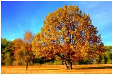 Een boom tijdens de herfst.