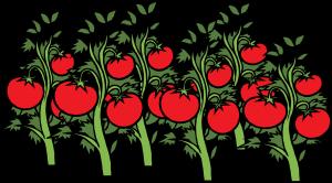 tomato-308855_1280